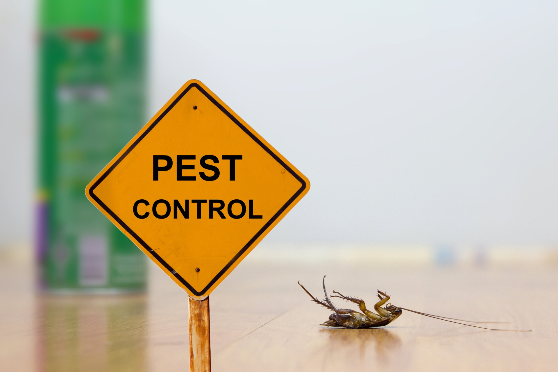 24 Hour Pest Control, Pest Control in Croydon, Addiscombe, Selhurst, CR0. Call Now 020 8166 9746
